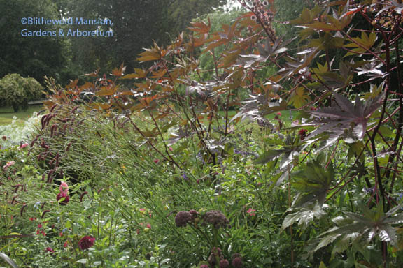 castor bean, angelica, and sanguisorba in the Display Garden