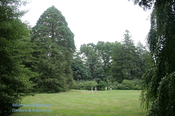 Tiny visitors and a giant sequoia in the Enclosed Garden