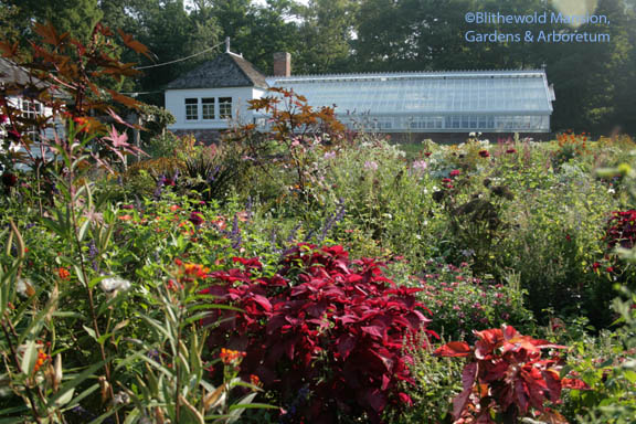 Potting shed and greenhouse - overlooking the Display Garden