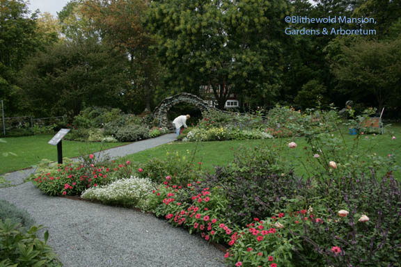 The Rose Garden last week (Dianne in the moongate)