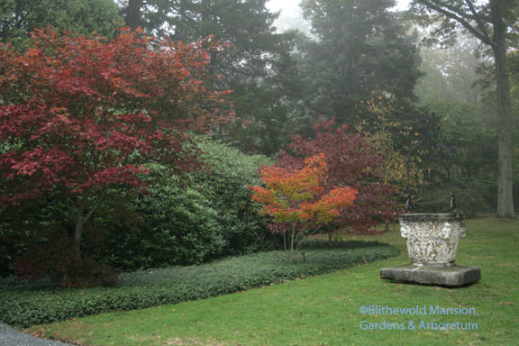Acer aconitifolium and Acer shirasawanum 'Aureum' (orange)