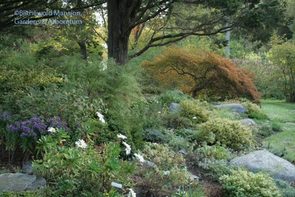 Fall in the Rock Garden