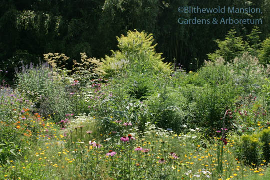 The most attractive plants - Blithewold
