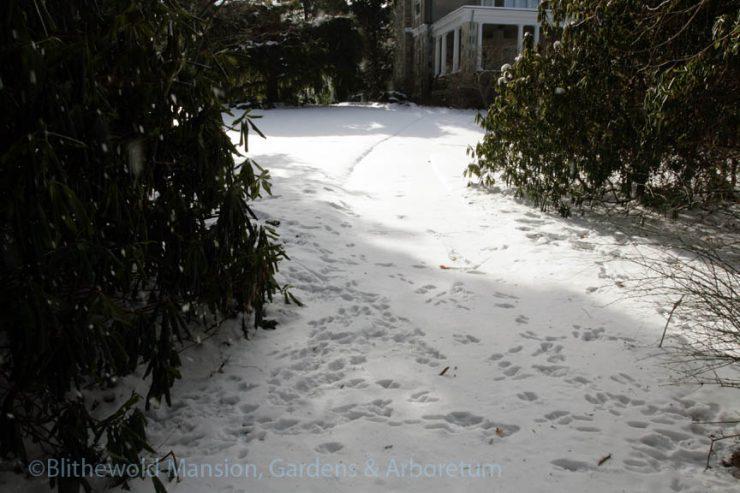 critter tracks near the North Garden