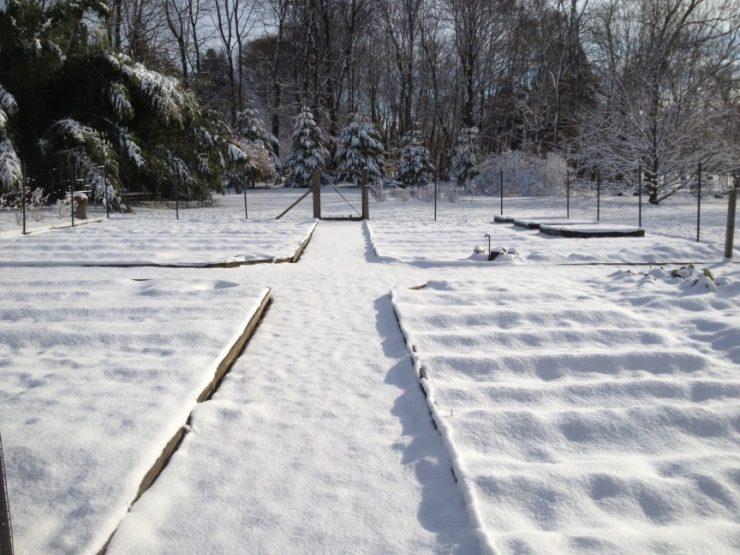 White Ground