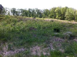 Pardee-Field