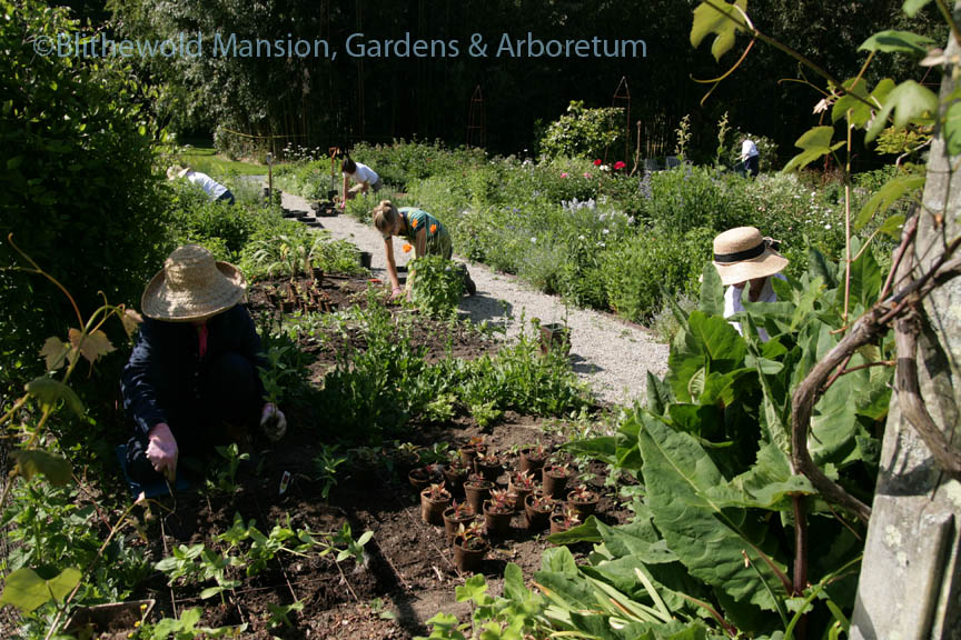 Planting the Cutting Garden