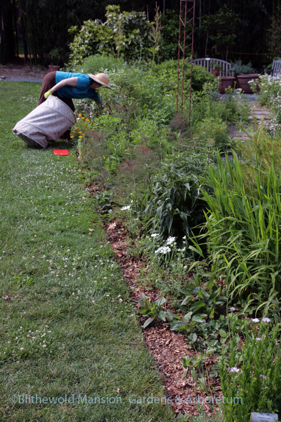 Top-dressing the Pollinator Bed with leaf mulch