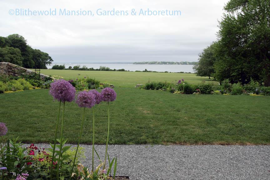 North Garden and Allium 'Pinball Wizard'