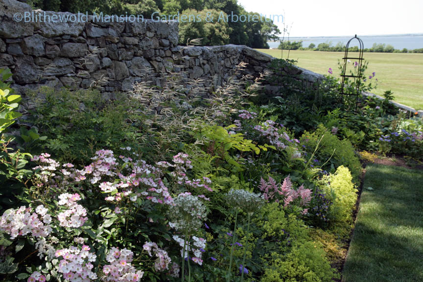 The North Garden wall bed with Aruncus 'Horatio' in the background