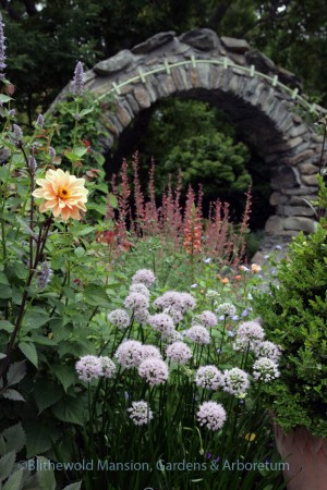 Allium 'Summer Beauty' and Agastache 'Acapulco Orange' framed by the Moongate