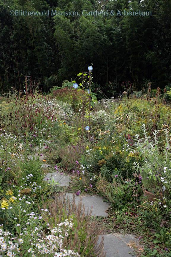 The Pollinator Garden is transitioning to a Bird Feeder Garden