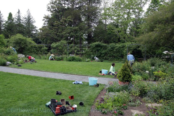Planting 634 new plants in the Rose Garden