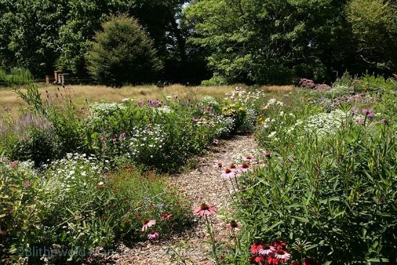 Pollinator Garden, 8-3-15