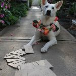 My pup Lily posing with our Floret Seed order