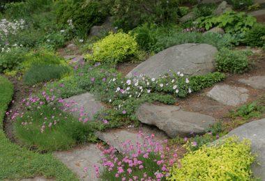 Rock Garden Gallery
