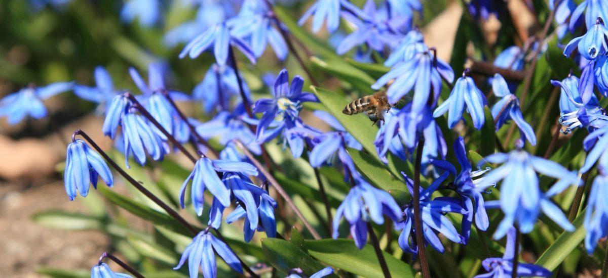 April to May Blooms