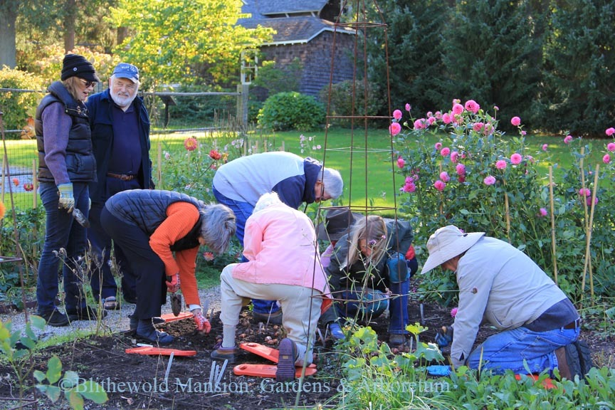 Our Tuesday volunteers planting tulips in the Cutting Garden