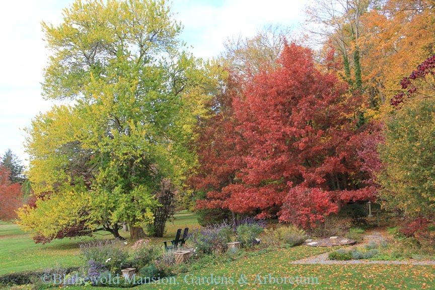Oak Tree over the North Garden