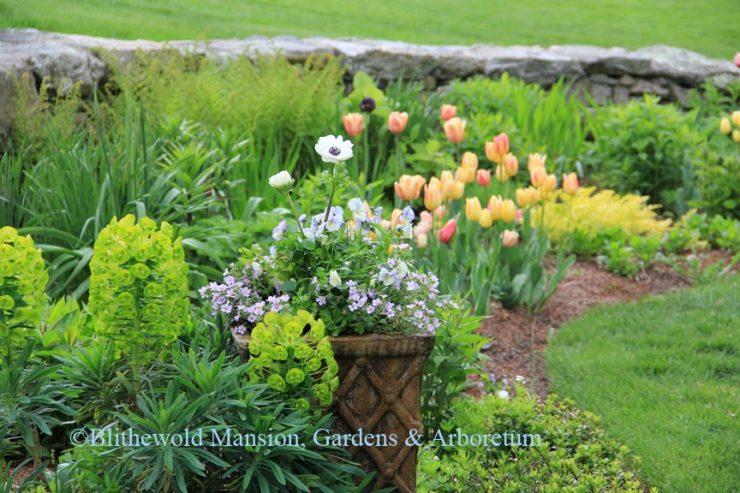 From Planning To Planting Blithewold
